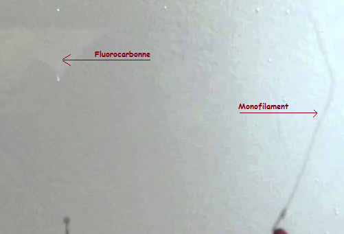 fluoro vs mono