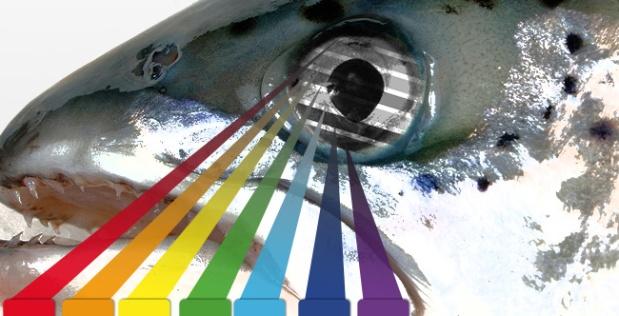 Démystifier les mythes : la couleur d'unleurre